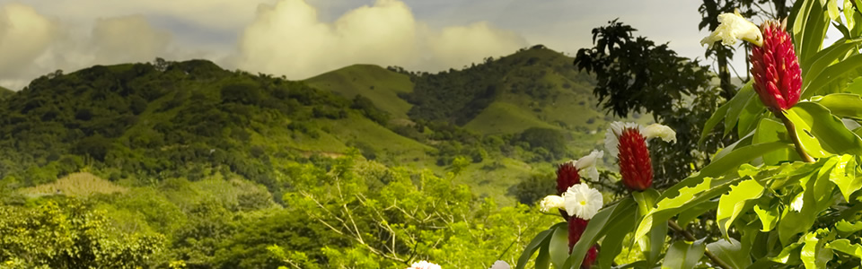 Embassy of Costa Rica Dinner Reception and Garden Soiree: Discover Lovely Tropical Beaches, the Wonders of Nature, Scintillating Culture, and Delectable Cuisine on Friday, March 16, 2018 at 6:00 PM